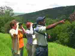 David Letsoalo is South Africa's top local Bird Guide and offers birding walks and outings into the indigenous forest