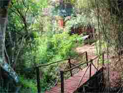 The Forest Lodge Cabins are tucked into the indigenous forest where bushbuck, bushpigs and caracal roam