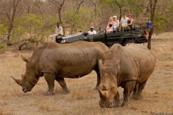 Kwa Madwala Game Drives