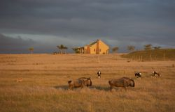 Springbok cottage at Sunset