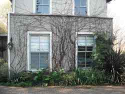 The self catering flat - a filigree  of Boston ivy stems in Winter.