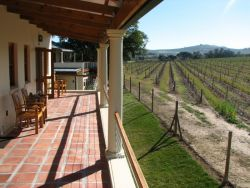 Vineyard Room View