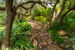The fragrant indigenous garden with its little pathway, nooks and crannies