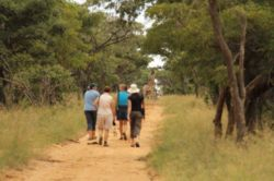 Walking with Giraffe and Gemsbok