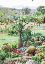 Succulent & Cactus garden - for guests to enjoy