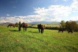 The horses grazing in front of the lodge