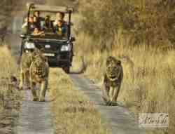 Big 5 safaris twice daily