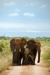 the Morukuru Elephant Family