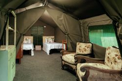 Safari Tents at Mount Park 2