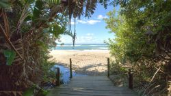 Strelitzia forest leading to beach