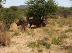 Otjiwa-Safari-Lodge-ResDest-Namibia-Otjiwarongo- Central region-Rhino