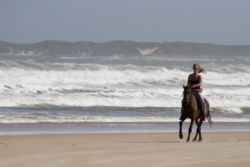 Beach Horse Rides available