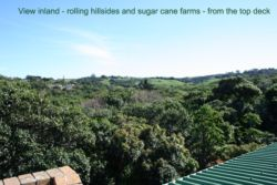 rolling hills, sugar cane fields and thickly wooded sub-tropical vegetation - view from roof deck