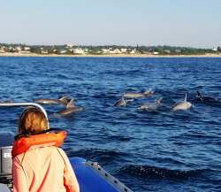 Dolphin watching activities