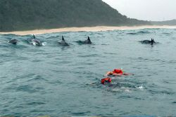 Dolphin Safari & Swims in Ponta