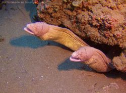 Picture of Eels taken while diving in Ponta