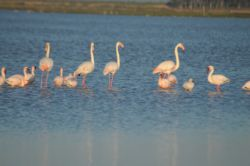 Flamingos less than 200m from Quay West