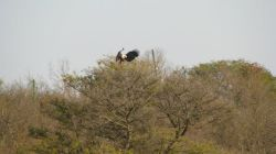 Amazing bird calls, such as the fish eagle