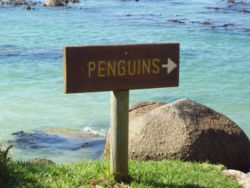 15min walk to Boulder's Beach Penguin Colony and swim among the penguins.