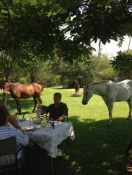 breakfast with 4 legged friends