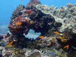 Unspoiled Coral Reefs