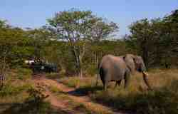 Game Drives at Shindzela