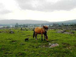 .... and our famous wild horses!