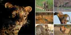 Tuli Game Reserve Cats