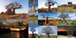 Tuli Game Reserve Trees