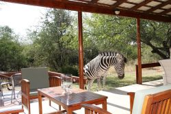 Patio area with Zebra visiting