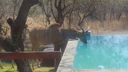 Pool with Kudu
