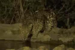 Bushvilla Umoja Kruger - wildlife without fences. there is a floodlight for the evenings resulting in some really nice surprises. We have a wildlife camera from which we post footage. Always feels like Christmas morning unwrapping the videos.
