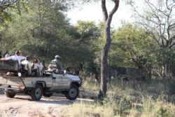 Game drive in a big 5 reserve
