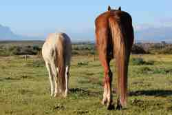 Welbedacht Game & Nature Reserve - Free Roaming Horses