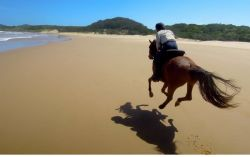 Escape with us on a Wild Coast Horse Trail....