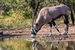 Wildlife on Zingela Game Reserves