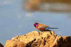 Birds to be seen on Zingela Game Reserves